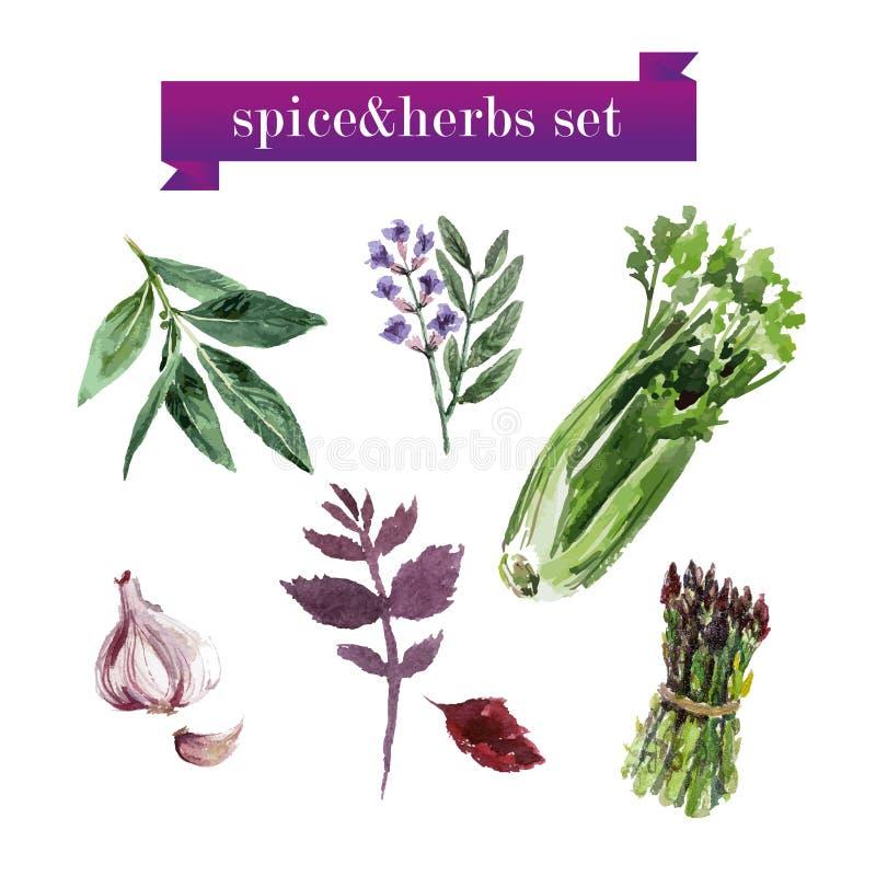 Sistema del vector de verduras frescas de la acuarela libre illustration