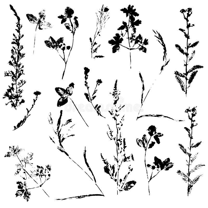 Sistema del vector del sello de la tinta de hierbas fotos de archivo