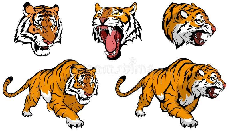 Sistema del vector del tigre, gráfico de vector ilustración del vector