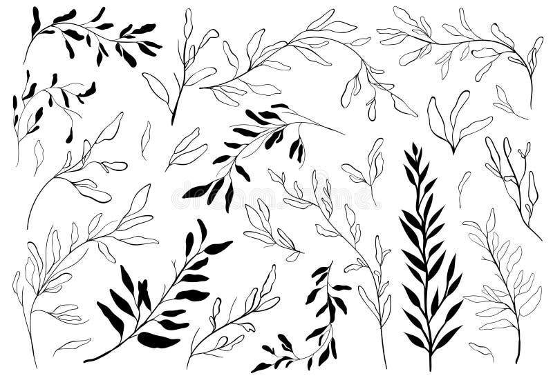 Sistema del vintage de ramas de árbol dibujadas mano con las hojas en el fondo blanco stock de ilustración