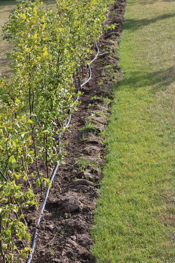 Sistema dell'irrigazione a goccia Tubo flessibile del gocciolamento di irrigazione del giardino Tubo flessibile speciale per irri fotografie stock libere da diritti