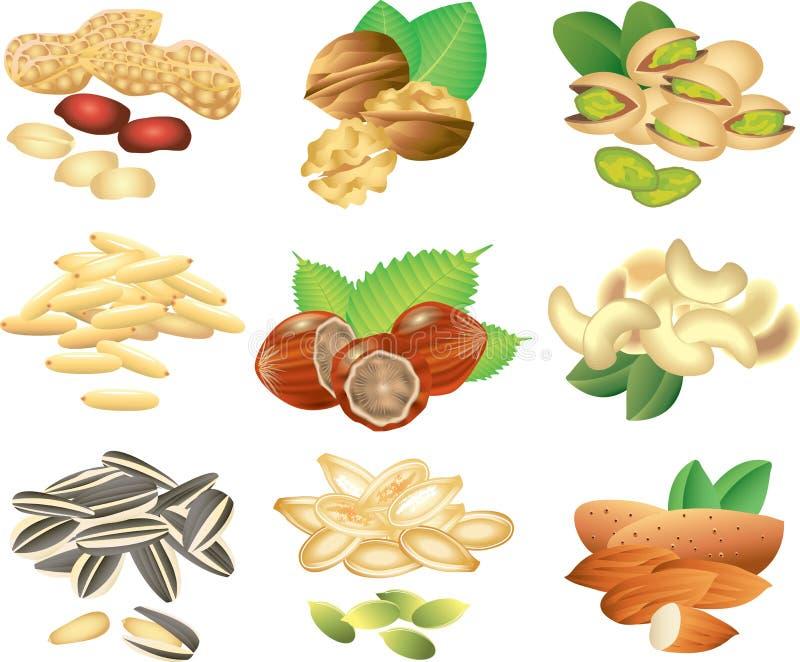 Sistema fotorrealista de las nueces y de las semillas stock de ilustración