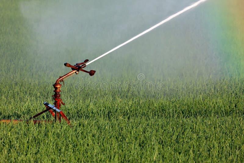 Sistema di spruzzatore dell'acqua che irriga un campo dell'azienda agricola fotografie stock libere da diritti