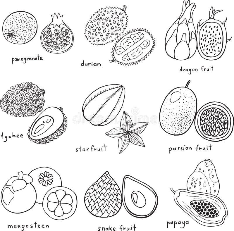 Sistema dibujado mano blanco y negro con las frutas exóticas tropicales libre illustration