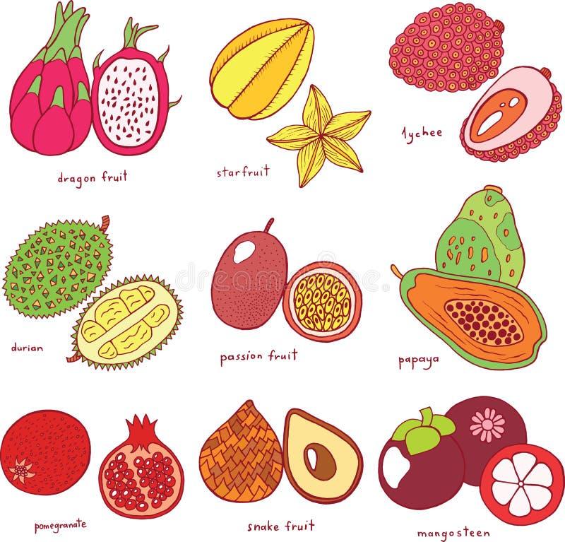 Sistema dibujado mano colorida con las frutas exóticas tropicales Grap del vector stock de ilustración