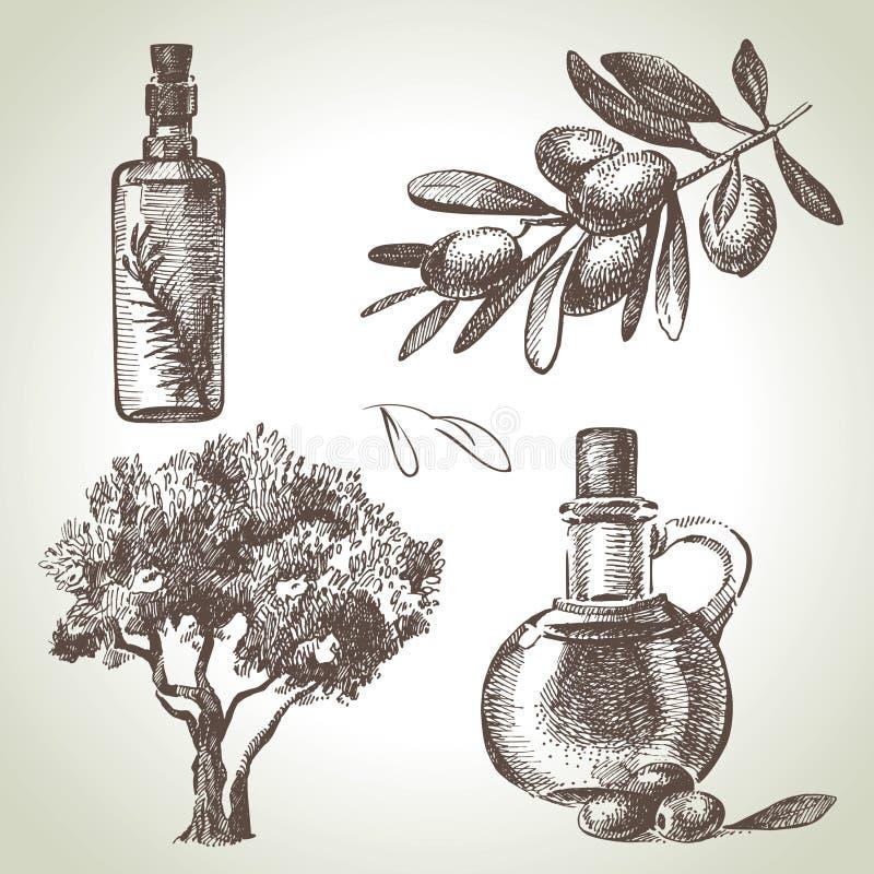 Sistema dibujado mano de la aceituna stock de ilustración