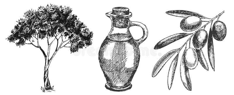 Sistema dibujado mano de la aceituna ilustración del vector