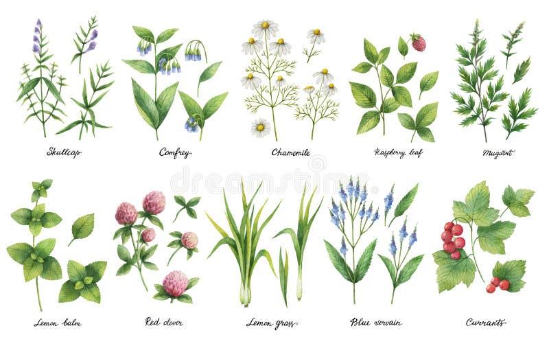 Sistema dibujado mano de la acuarela de hierbas y de especias libre illustration