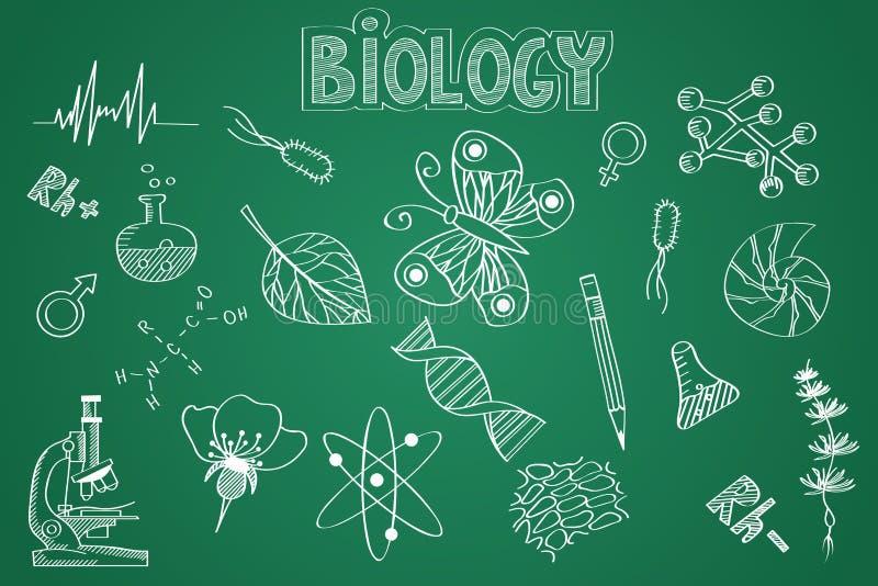 Sistema Dibujado Mano De La Biología Tiza En La Pizarra Ilustración del  Vector - Ilustración de sistema, dibujado: 50357055