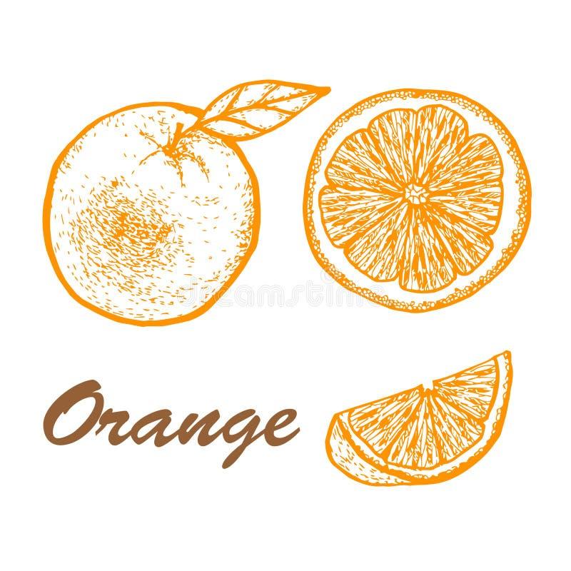 Sistema dibujado mano de la naranja Dibujos exóticos de la fruta tropical aislados en el fondo blanco Ejemplo bot?nico de frutas imagen de archivo libre de regalías