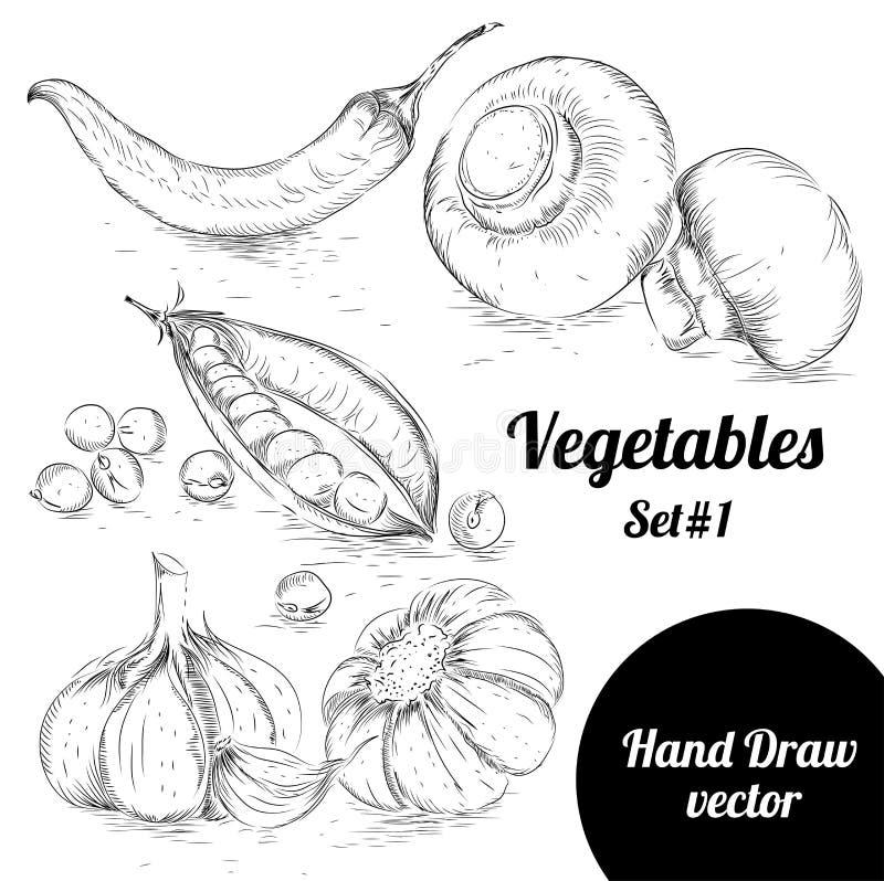 Sistema dibujado mano del estilo del bosquejo de verduras Ejemplo del vector de la comida del eco del vintage Pimientas maduras ilustración del vector