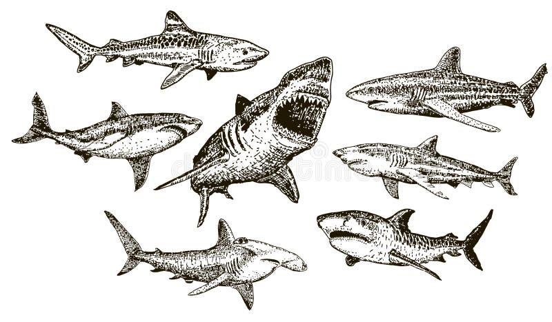 Sistema dibujado mano del icono del tiburón de la tinta del vector ilustración del vector