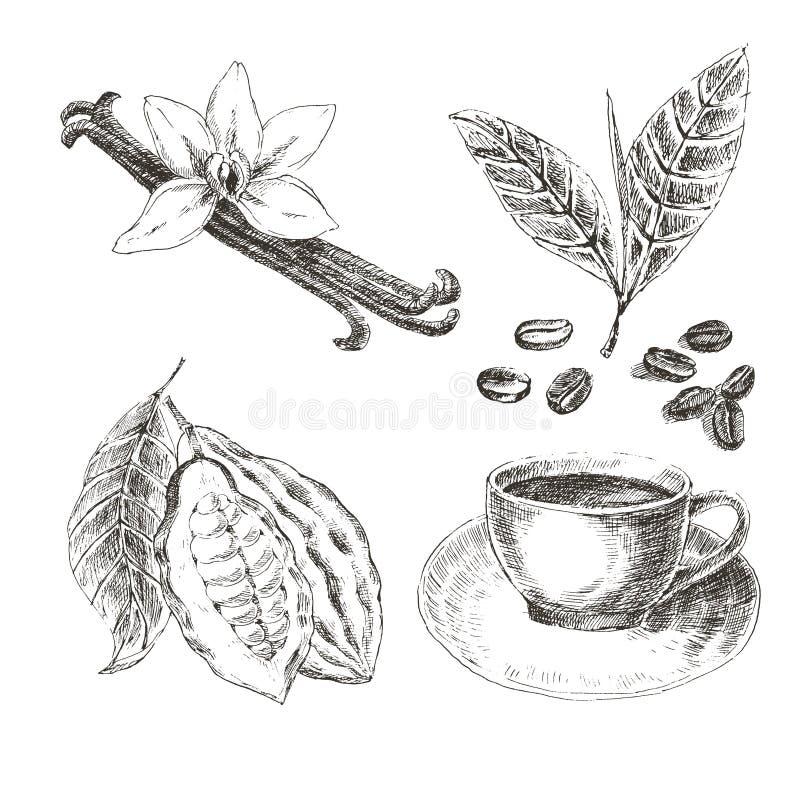 Sistema dibujado mano del vector con las especias del postre Ilustración de la vendimia Colección retra de vainilla, cacao, grano stock de ilustración