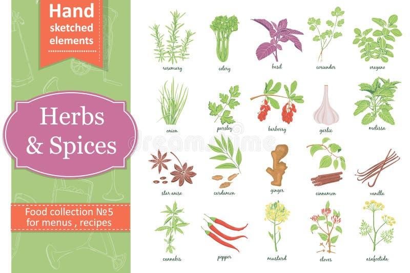 Sistema dibujado mano del vector con las hierbas y las especias libre illustration