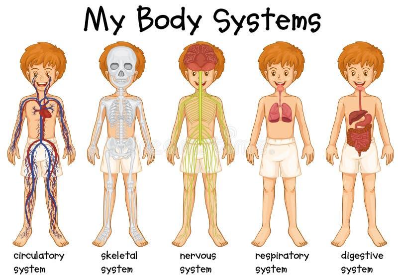Sistema diferente no ser humano ilustração royalty free