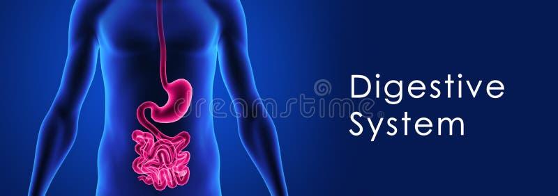 Sistema digestivo ilustração do vetor