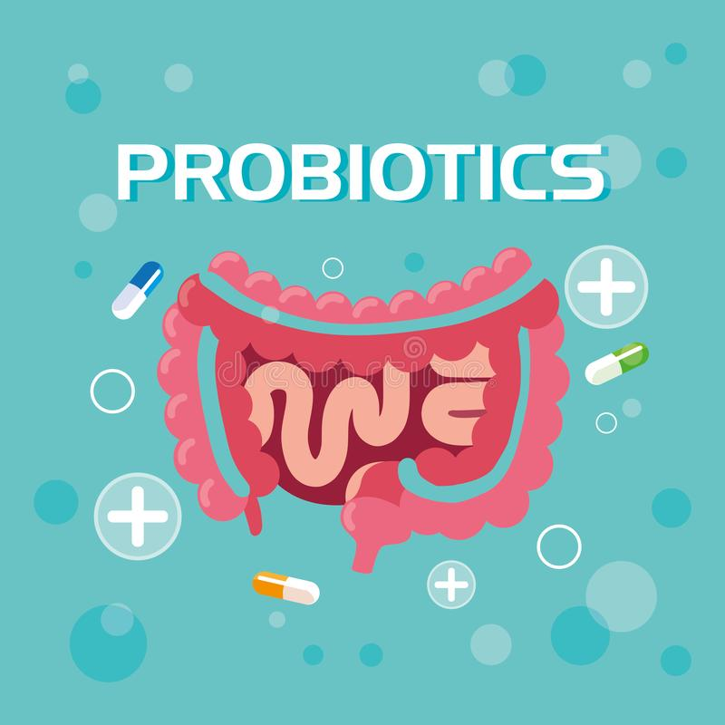 Sistema digestivo com medicinas do probiotics ilustração stock