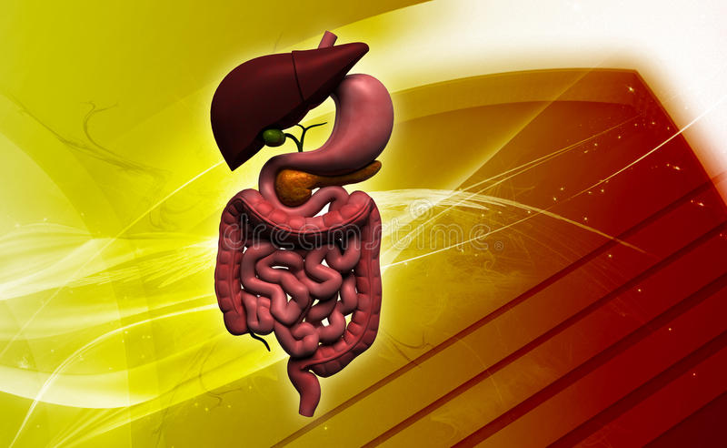 sistema digestivo humano ilustração do vetor