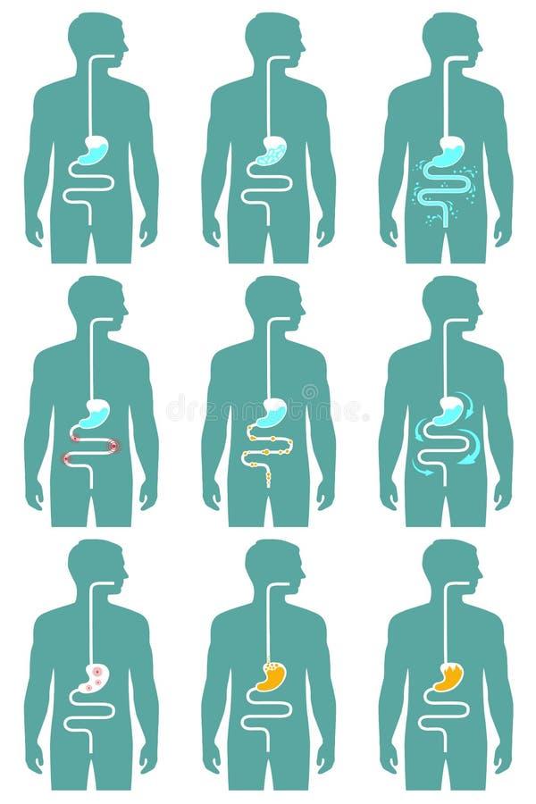 Sistema digestivo humano, ilustração do vetor