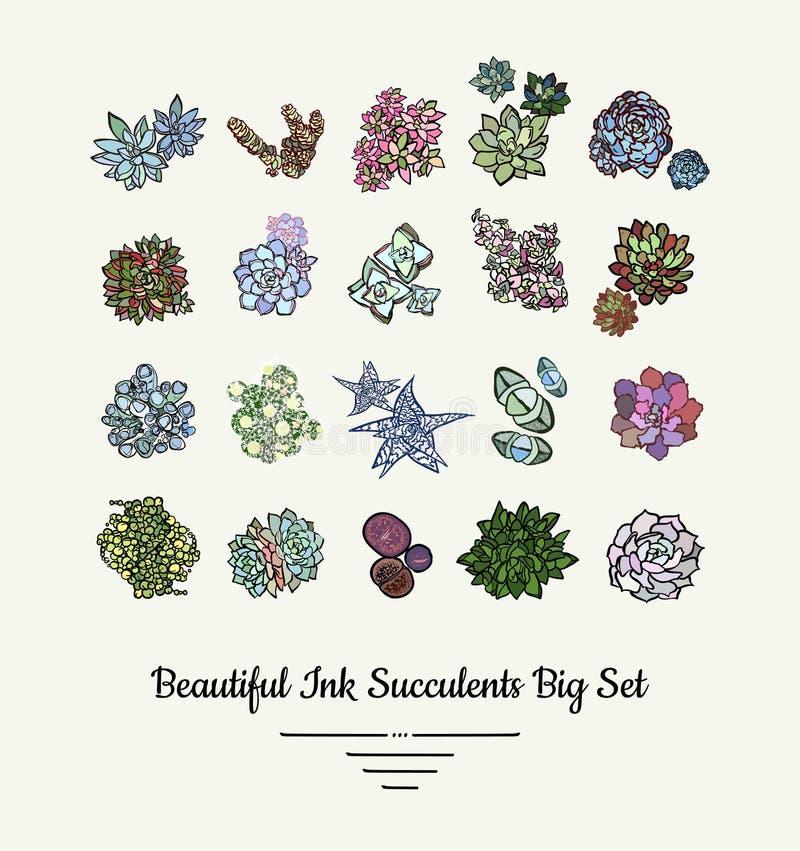 Sistema exhausto aislado vector del ejemplo de la mano de los Succulents Plantas suculentas logotipo, iconos, cartel, bandera, po ilustración del vector