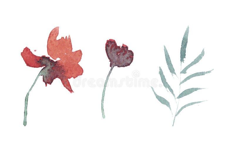 sistema exhausto de la acuarela de la mano de flores y de hojas ilustración del vector