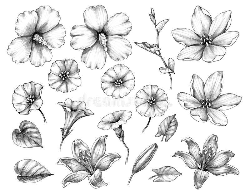 Sistema exhausto de la mano de hibisco, de lirio, y de flores de la enredadera libre illustration