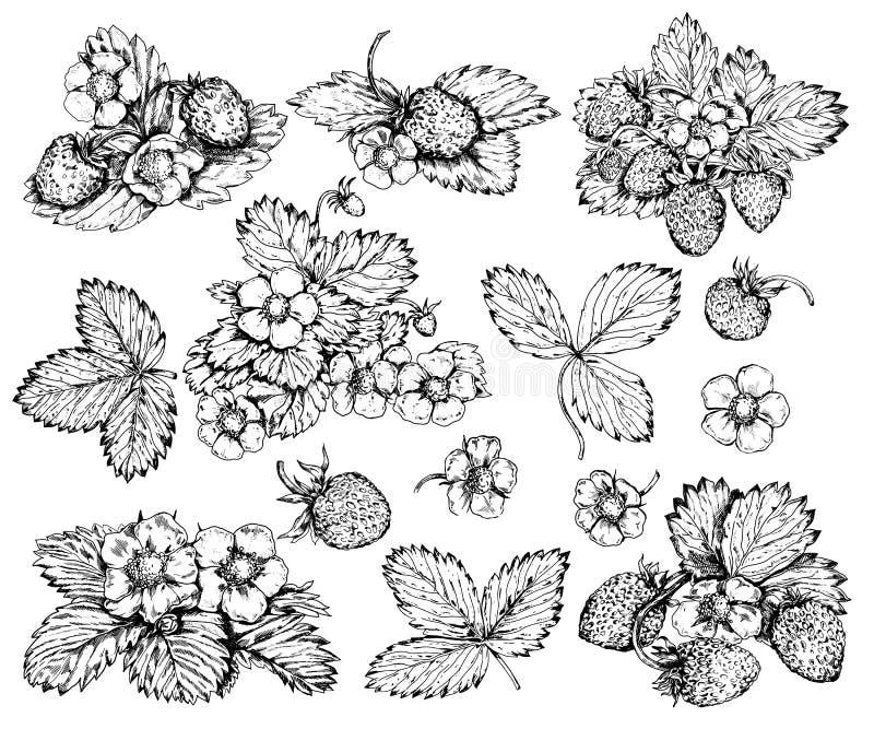 Sistema exhausto de las fresas salvajes del vintage de la mano realista stock de ilustración