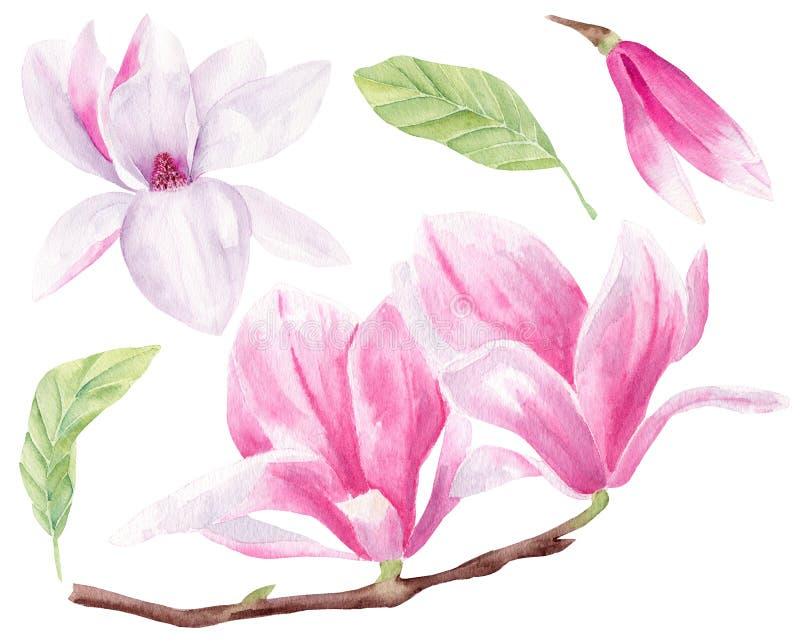 Sistema exhausto de los ejemplos de la trama de la acuarela de la mano del flor de la magnolia stock de ilustración