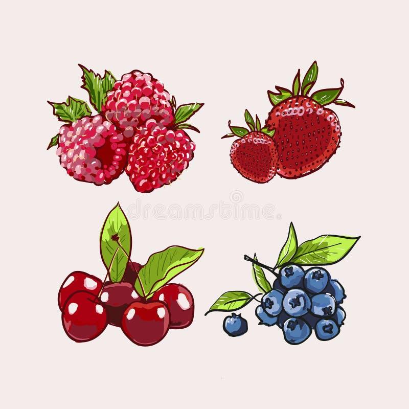 Sistema exhausto del vector de Berry Hand Ejemplo colorido del marcador de la baya Bayas que graban la l?nea del bosquejo del gar libre illustration