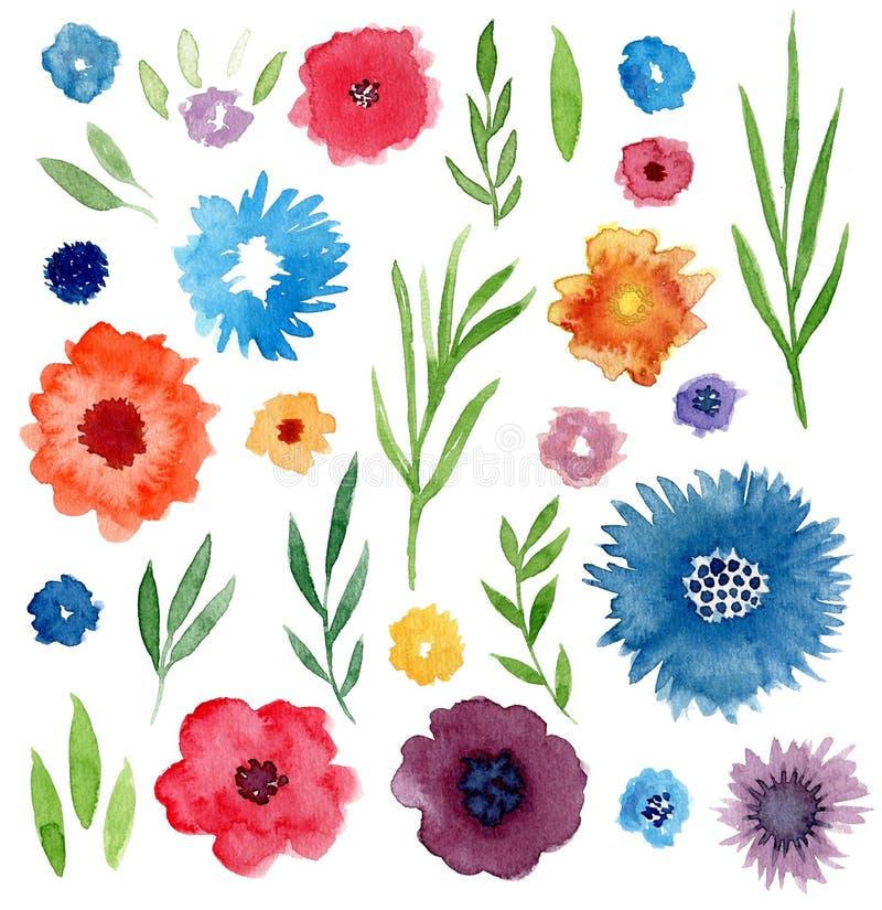 Sistema floral de la acuarela Flores y hojas aisladas para las invitaciones, la boda, la decoración del cumpleaños o el diseño de stock de ilustración