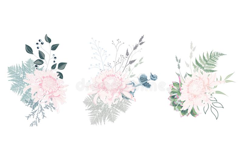 Sistema floral de la composición de la tarjeta de verano de la primavera para el diseño gráfico del cartel con el crisantemo, los libre illustration