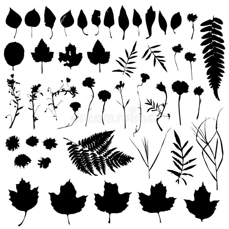 Sistema floral de los elementos naturales grandes del diseño Colección gráfica con las hojas y los elementos de las flores Diseño ilustración del vector