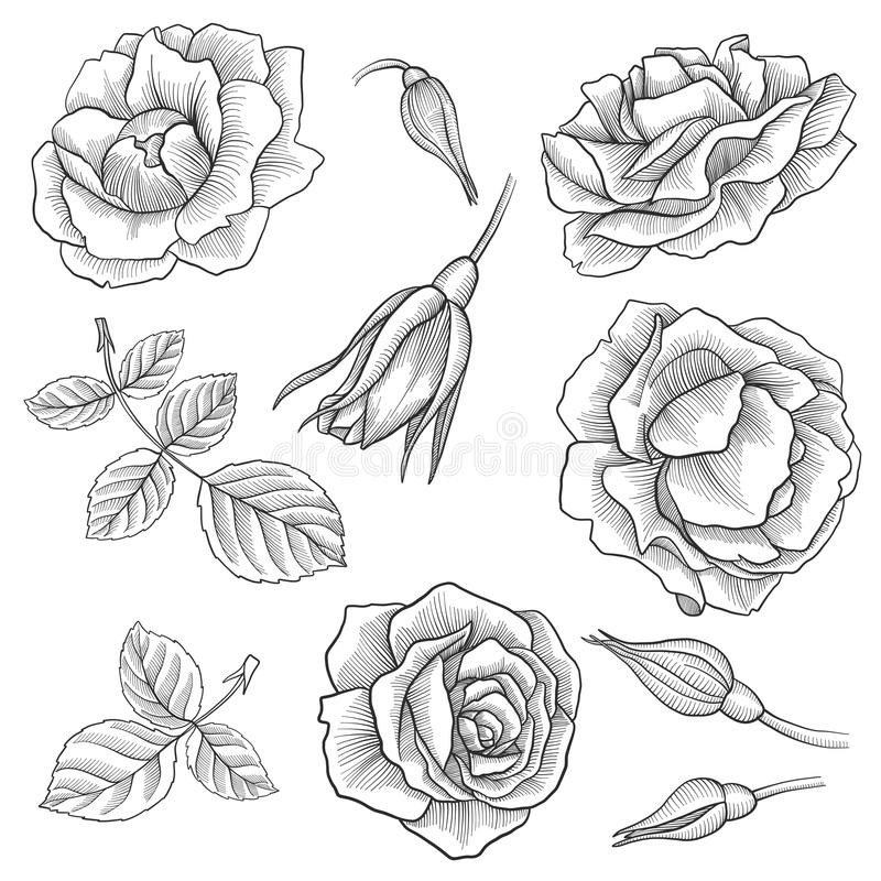 Sistema floral del vector del vintage ilustración del vector