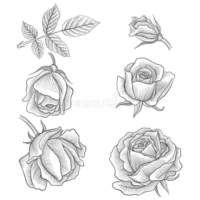 Sistema floral del vector del vintage stock de ilustración