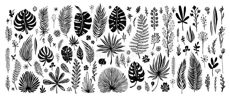 Sistema grande de elementos negros del garabato hojas tropicales exóticas en un fondo blanco Ejemplo botánico del vector grande ilustración del vector