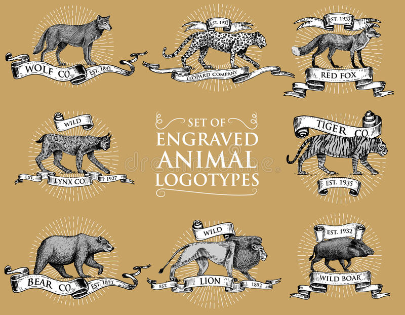 Sistema grande de emblemas del vintage, logotipos o insignias con los animales salvajes tigre, rey del león, leopardo y verraco,  libre illustration
