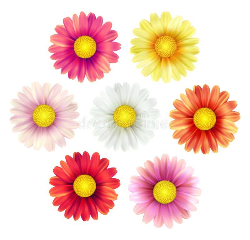 Sistema grande de flores coloridas hermosas de la margarita de la primavera aisladas en el fondo blanco Ilustración del vector stock de ilustración
