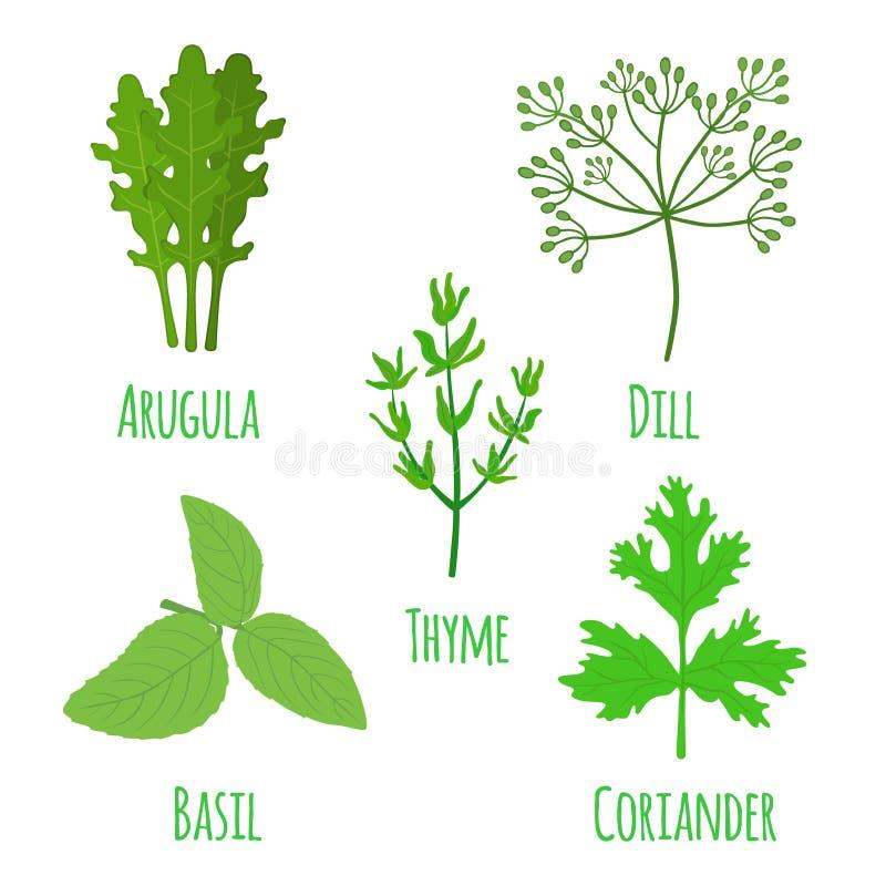 Sistema herbario, condimento, especia Arugula, coriandro, tomillo, albahaca, stock de ilustración
