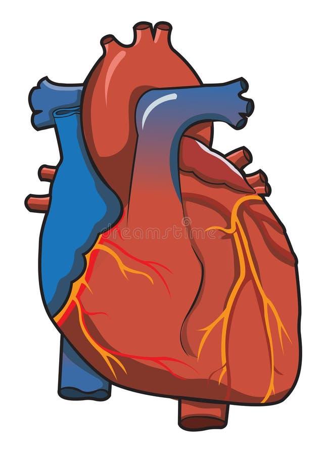 Sistema humano del corazón con blanco aislado stock de ilustración