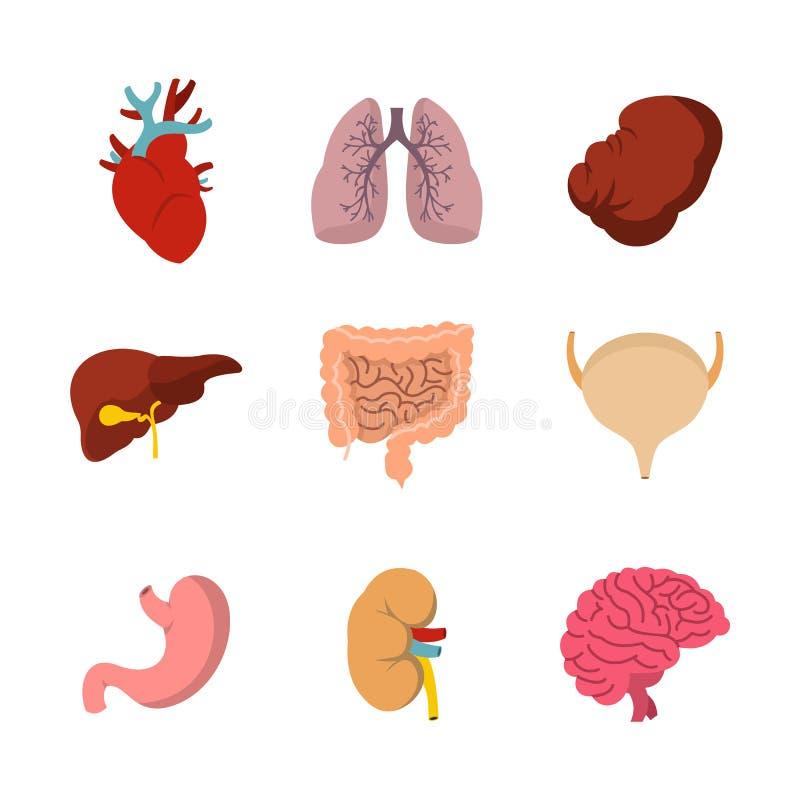 Sistema humano del icono del órgano interno, estilo plano libre illustration