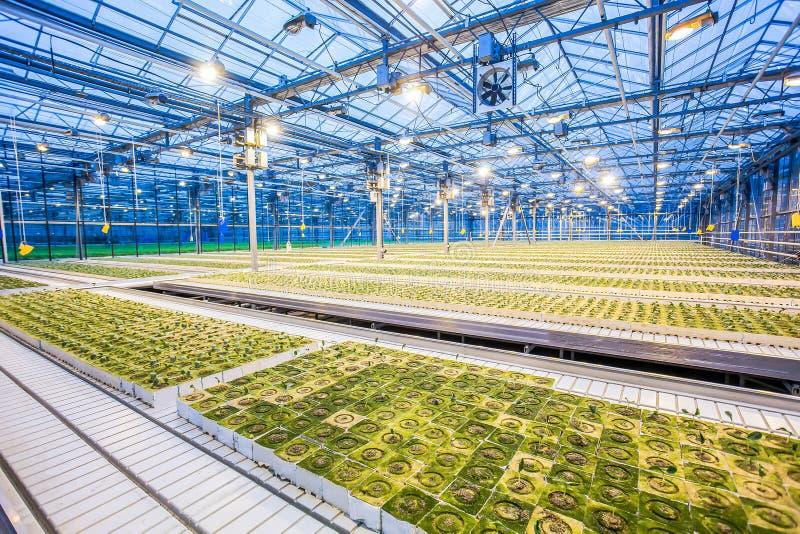 Sistema idroponico enorme della piantagione immagini stock