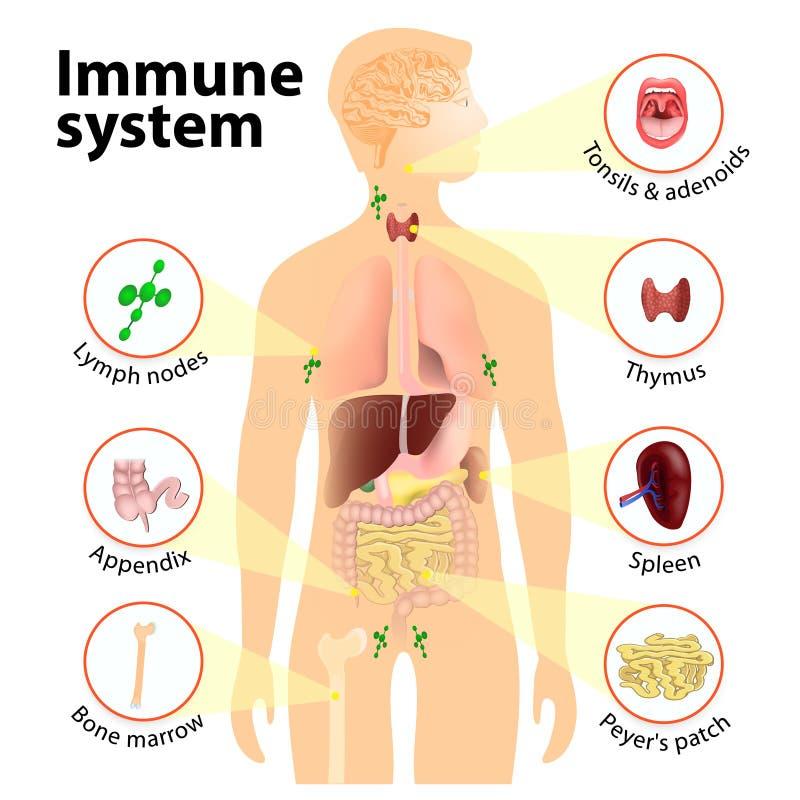 Sistema inmune stock de ilustración