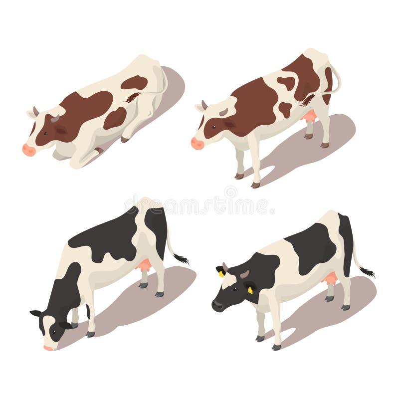 Sistema isométrico del vector 3d de vacas ilustración del vector