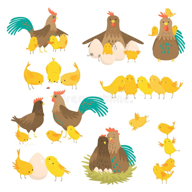 Sistema lindo de la familia del gallo de la historieta aislado en el fondo blanco libre illustration