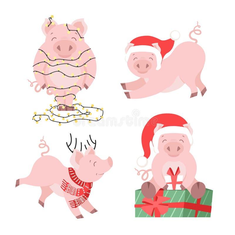 Sistema lindo del cerdo de la Navidad Ejemplo guarro del vector de las vacaciones de invierno para las tarjetas aisladas libre illustration