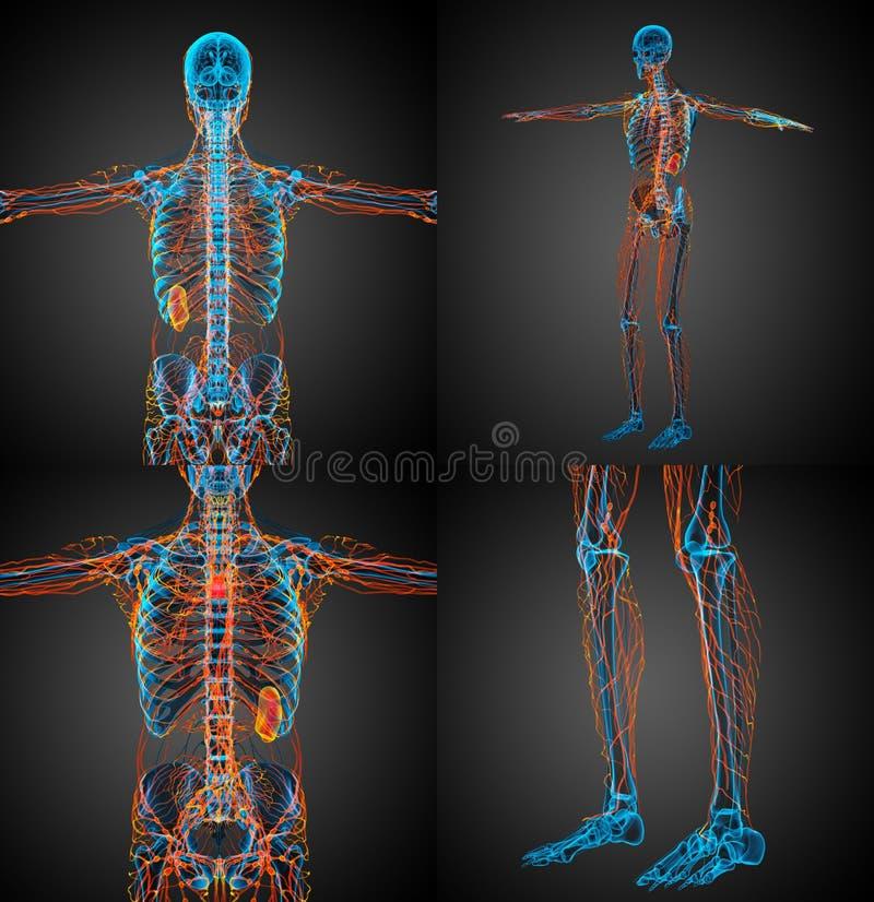 sistema linfático stock de ilustración