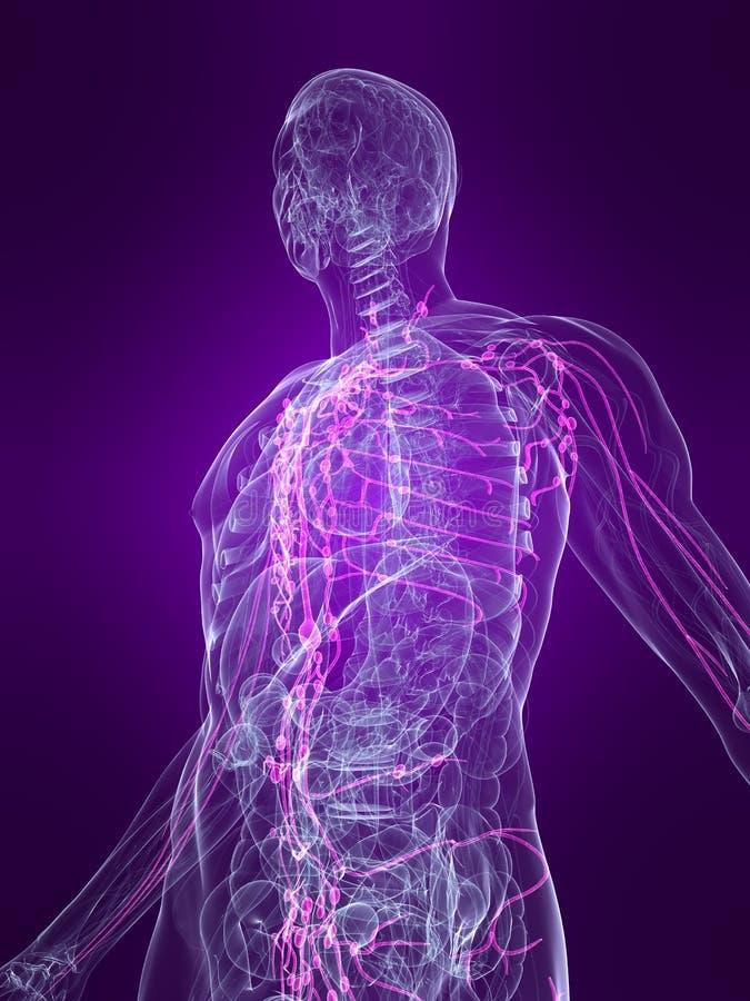 Sistema linfático destacado ilustración del vector