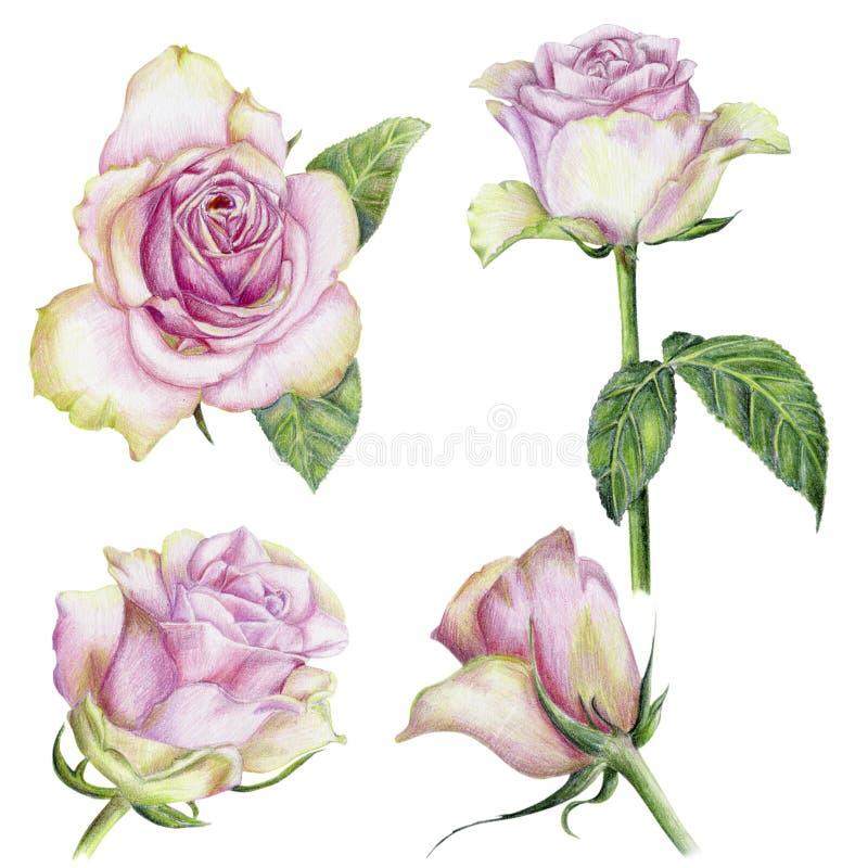 Sistema a mano de rosas ilustración del vector