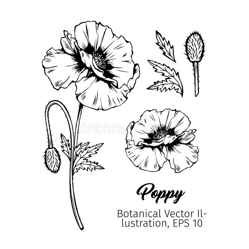 Sistema negro botánico de los bosquejos de la tinta de las amapolas ilustración del vector