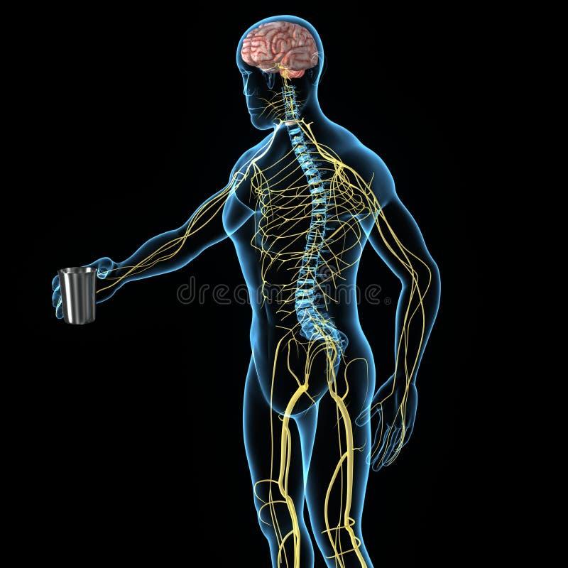 Sistema nervioso stock de ilustración
